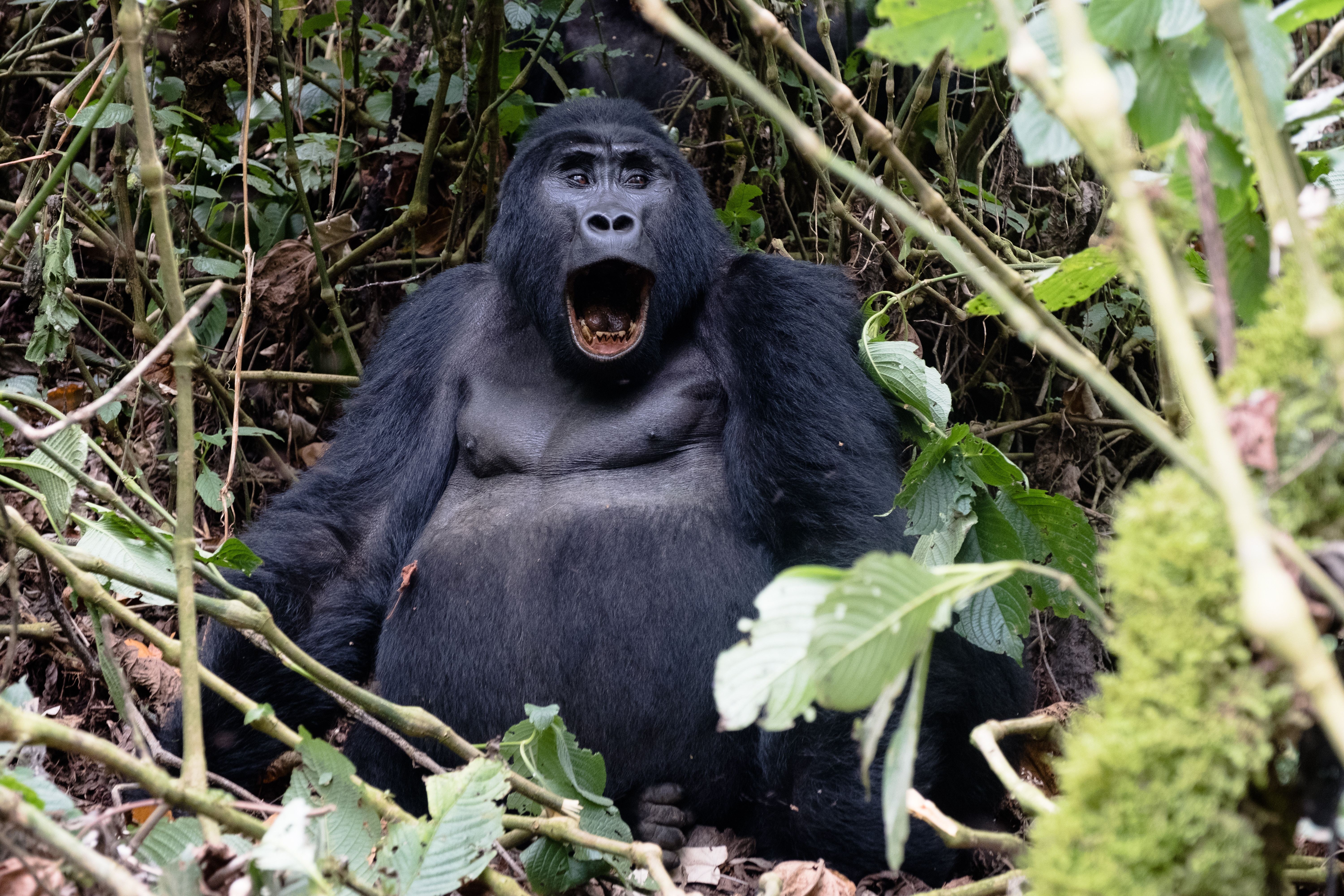 shocked gorilla to represent problems with unethical advertising